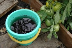 Compost tea is simply tea made out of compost. Compost tea can be made very simply, and this is the way we do it. Garden Compost, Garden Soil, Garden Beds, Organic Gardening, Gardening Tips, Vegetable Gardening, Growing Tomato Plants, Growing Tomatoes, Grow Bags