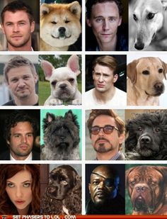 Avengers cast as dogs