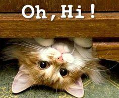 I love peekaboo kitties!