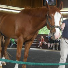 Be A Bono  A thoroughbred racehorse at Kentucky Horse Park. I met this guy and he is gorgeous!!