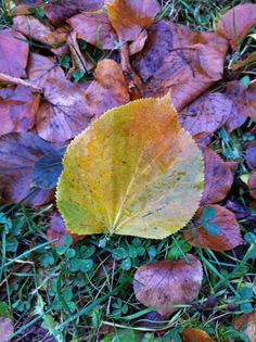 Day 59 - Autumn leaves