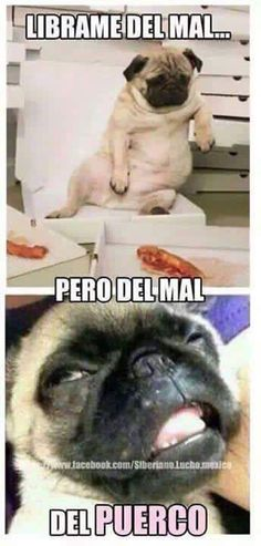 Por favor líbrame del mal... Fat Memes, Funny Images, Funny Pictures, Mexican Humor, Humor Mexicano, Spanish Humor, Smiles And Laughs, Gym Humor, Pugs