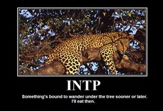 INTP:  Something's bound to wander under the tree sooner or later.  I'll eat then.