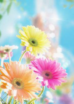 Light Colored Flowers:スマホ壁紙