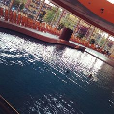 Das Wellenbecken in der Therme Stegersbach Travel, Waves, Viajes, Destinations, Traveling, Trips, Tourism