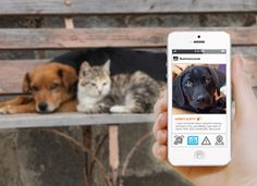 An App for Finding Missing Pets   Tech + Tools   PureWow National