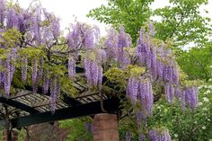 Although early within notion, the particular pergola may be having a bit of a current