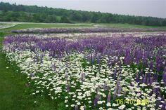 13 acres of Wildflowers in Vermont