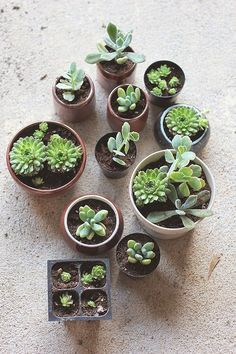 How to Repot Succulents is part of Repotting succulents - I rounded up the tips (How To Repot Succulents) that I learned in one place for anyone else to learn from, but also so I don't forget them Transplant Succulents, Replanting Succulents, Growing Succulents, Succulents In Containers, Cacti And Succulents, Planting Flowers, Container Flowers, Container Plants, Succulent Care
