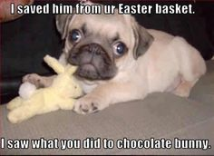 I saved him from your Easter basket