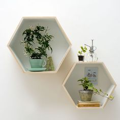 House your plants in quirky, hexagonal shelves