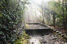 朝の日が差し込む林道はちょっと別世界のようです