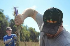 Hemp Harvest. Calhoun, KY www.greenremedy.com  Photos by: Uncle Bob's Studio https://m.facebook.com/UncleBobStudios/