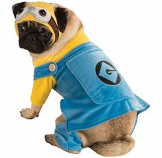The Minion Dog Costume will transform your pooch into a beloved Minion from the Despicable Me films! This cute costume features a jacket that fits comfortably on your dog to appear as though he's wearing stylized overalls.