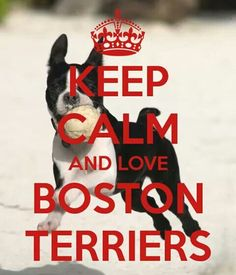 Keep Calm and <3 Boston Terriers!