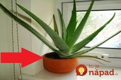 Aloe vera also beneficial in cutting back the overweight of body by its normal use. Aloe vera is the ideal example in the organic treatment of skin difficulties. Aloe Vera Face Mask, Aloe Vera For Hair, Plantes Feng Shui, Makeup Jobs, Decoration Plante, Concealer Palette, Natural Kitchen, How To Apply Lipstick, Best Beauty Tips