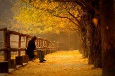 <<내 마음의 가을 숲으로 : 이해인 수녀>>   1.하늘이 맑으니 바람도 맑고 내 마음도 맑습니다. 오랜 세월 사랑으로 잘 익은 그대의 목소리가 노래로 펼쳐지고 들꽃으로 피어나는 가을. 한 잎 두 잎 나뭇잎이 물들어 떨어질 때마다 그대를 향한 나의 그리움도 한 잎 두 잎 익어서 떨어집니다. 2.사랑하는 이여 내 마음의 가을 숲으로 어서 조용히 웃으며  걸어오십시오. 낙엽 빛깔 닮은 커피 한 잔 마시면서,우리 사랑의 첫 마음을 향기롭게 피워 올려요. 쓴맛도 달게 변한 오랜 사랑을 자축해요. 지금껏 살아온 날들이 힘들고 고달팠어도 함께 고마워하고,앞으로 살아갈 날들이 조금은 불안해도 새롭게 기뻐하면서  우리는 서로에게 부담 없이 서늘한 가을바람 가을하늘 같은 사람이 되기로 해요