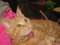 Tigger the cat. Love the expression in his eyes!  #cat #Tigger