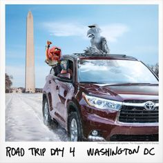 President Gonzo kind of has a ring to it, wouldn't you say? In D.C., there was #NoRoomForBoring on our cross-country road trip in the #ToyotaHighlander to the LA premiere of Muppets Most Wanted.