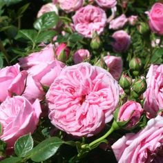 12 x Rose avec feuillages Hell Rouge Art Fleurs-Soie Fleurs