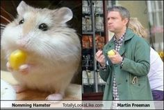cute martin freeman | Nomming Hamster Totally Looks Like Martin Freeman | Random Overload