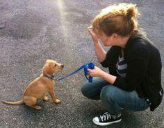 Puppy & Dog Training Santa Monica, CA   Balanced Dogs 1158 26th Street #345 Santa Monica, CA 90403 310-227-6785 http://balanceddogs.com/