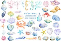 Watercolor Seashell Collection