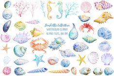Watercolor Seashell Collection by Corner Croft on Watercolor Animals, Watercolor Paintings, Watercolors, Seashell Tattoos, Bridesmaid Inspiration, Starfish, Sea Shells, Art Projects, Illustration Art