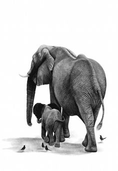 Charcoal Drawings by Ashleigh Olsen, African Wildlife Art, Elephant Mother and… Baby Elephant Drawing, Mom And Baby Elephant, Elephant Artwork, Baby Drawing, Elephant Love, Elephant Print, Baby Elefant, Elephants Photos, African Artists