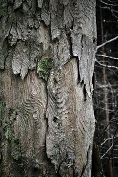 Pickels, City Photo, Trees, Photography, Photograph, Wood Illustrations, Fotografie, Wood, Fotografia