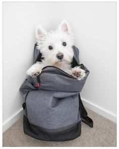 - Tap the pin for the most adorable pawtastic fur baby apparel! Youll love the dog clothes and cat clothes! Westies, Westie Puppies, Cute Puppies, Cute Dogs, West Terrier, West Highland White Terrier, Terriers, Animals And Pets, Baby Animals