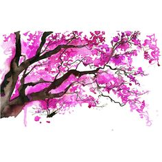 Watercolor Japanese Cherry Blossom Tree Painting, Jessica Durrant - The Cherry Blossom Tree print found on Polyvore