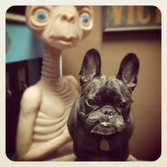 E.T. and a French Bulldog #dogs I am in love with this picture. My favorite things