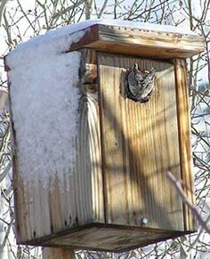 BUILDING PLANS SCREECH OWL HOUSE | Home Building Designs