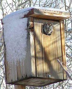 BUILDING PLANS SCREECH OWL HOUSE | Home Building Designs