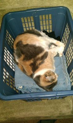 Basket of clean laundry = great place for a nap cute cat