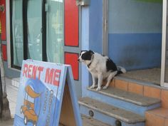 Sayulita dog.