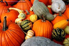 pictures of harvesting | Picture of Mixed Gourds And Pumpkins - Fall Harvest - World of Stock