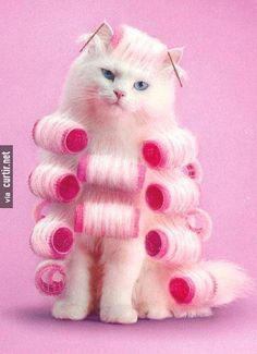 Reminds me of chewie wjen he gets in to my rollers