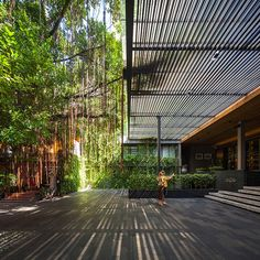 Under the Ficus Shade | Bangkok, Thailand | TROP -