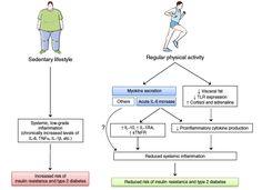 Miokinas y Síndrome Metabólico (II) http://blgs.co/B5H9i0