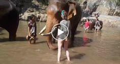 Turista Fascinada Por Elefantes Tem Dececionante 1ª Experiência Ao Ficar Perto De Um