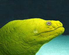 While scuba diving I saw a Moray eel.  He was beautiful and I wanted to touch him.  Big no no!