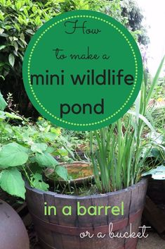 How to make a mini wildlife pond. A pond is the best way to help wildlife in your garden, and here are tips for small ponds in small or middlesized gardens. Patio Pond, Ponds Backyard, Small Backyard Landscaping, Landscaping With Rocks, Landscaping Ideas, Container Pond, Container Water Gardens, Container Gardening, Ponds For Small Gardens