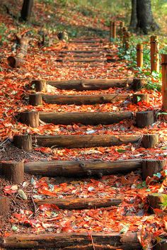 Nakagawa Park, Yokohama, Japan (this is where I grew up until I was Landscape Stairs, Landscape Design, Garden Design, Yokohama, Garden Paths, Lawn And Garden, Garden Stairs, Outdoor Stairs, Stairway To Heaven