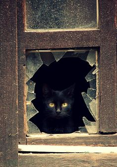 cat/window………'BLACKIE' TOLD ME HE DIDN'T BREAK THIS WINDOW…….AND YOU KNOW WHAT??……..I BELIEVE HIM …….IT'S BEEN THIS WAY SINCE WE MOVED IN…………ccp
