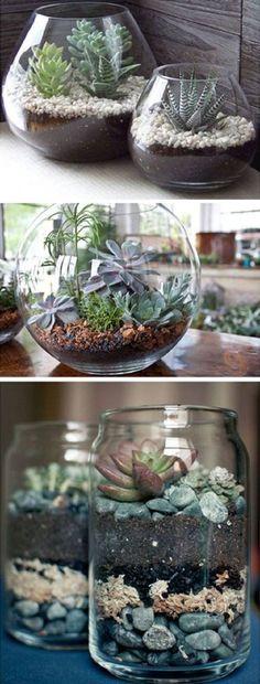 Растения в стеклянных банках