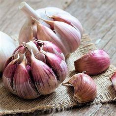 DIY přírodní léky z léčivých rostlin proti kašli, rýmě, chřipce a nachlazení.Sirupy z rýmovníku, česneku, bezu černého, meduňky, tymiánu, divizny a mateřídoušky Garlic, Vegetables, Health, Food, Gardening, Cookies, Facebook, Fitness, Benefits Of Garlic