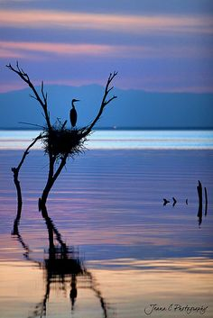 Tranquility, and a clever bird with an eye for location...location...location... :)