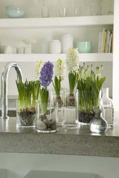 Spring home decor - flowering bulbs in glass vases - hyacinths  with white ones - Both flowers smells delicious - you smell the spring | Bloemen Bureau Holland